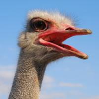ostrich-current-recession